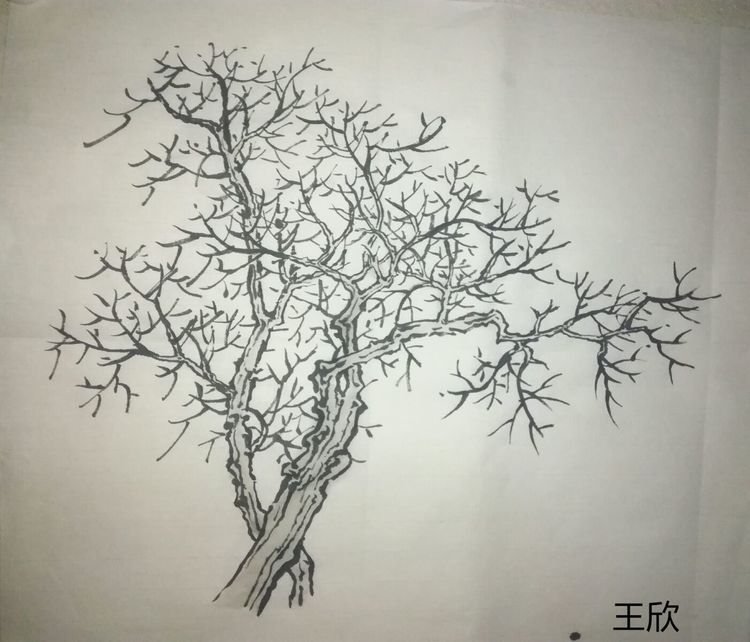 树外形临摹手绘